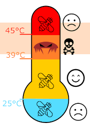 Thermometer showing range of 40 to 46C